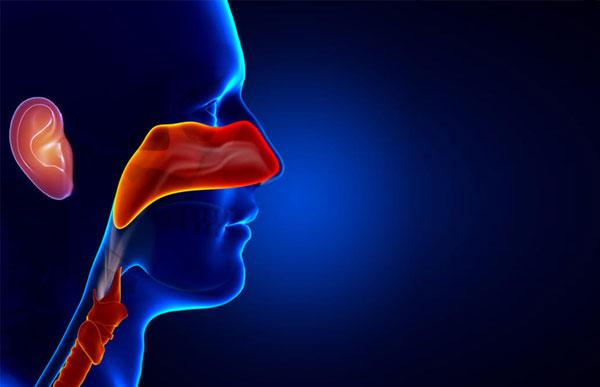 Otorhinolaryngology or ENT (Ear, Nose and Throat)